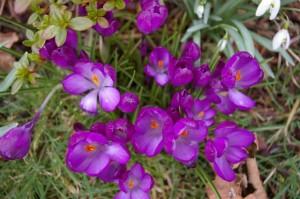 garden, march 002