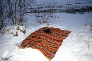 snow nov-dec. 2010 043